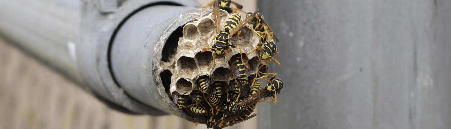 mge_slide-abeilles